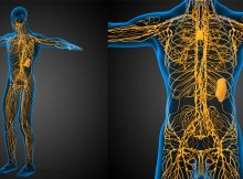 Signs of a Clogged Lymphatic System and How to Treat Them